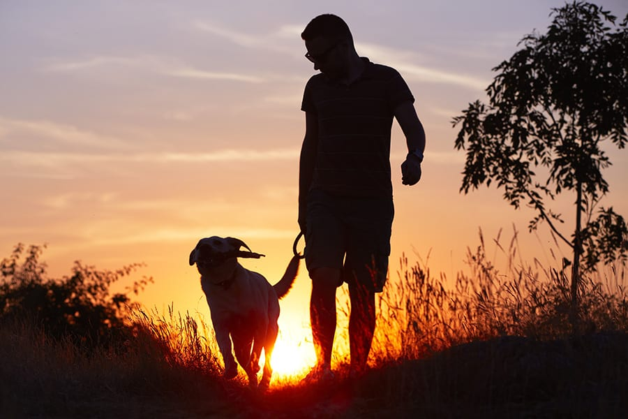Person walking dog on a leash in tall grasses near a tree, all silhouetted by a bright setting sun.